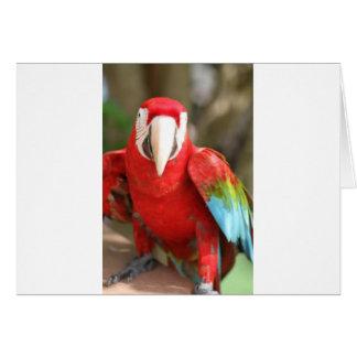 Parakeet Grußkarte