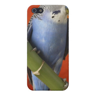 Parakeet iPhone 5 Schutzhüllen