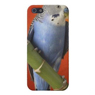 Parakeet iPhone 5 Etuis