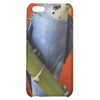 Parakeet iPhone 5C Hüllen