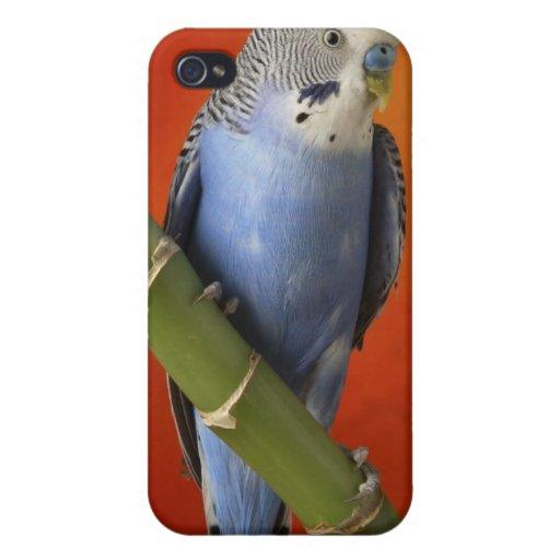 Parakeet Etui Fürs iPhone 4