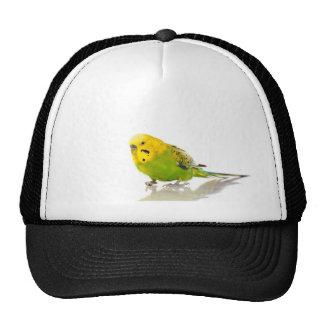 parakeet, netzmütze