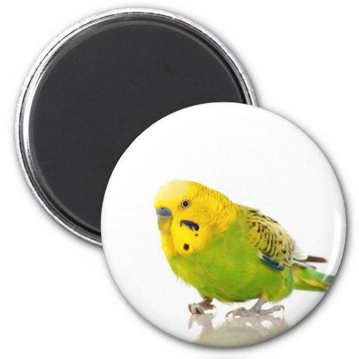 parakeet, kühlschrankmagnete