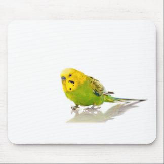 parakeet, mauspad