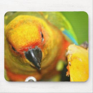 Parakeet Mousepad