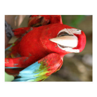 Parakeet Postkarten