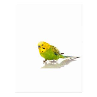 parakeet, postkarten