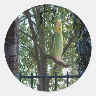Parakeet Runder Aufkleber
