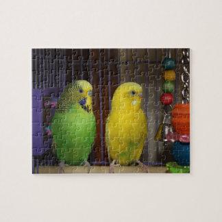 Parakeet-Vogel-Puzzlespiel