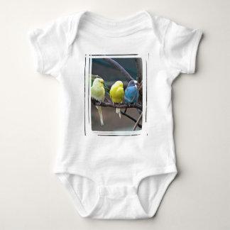 Parakeets Budgies plappert | Vogel-Foto nach Baby Strampler