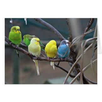 Parakeets Budgies | Vogel-Foto Grußkarte
