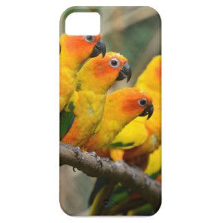 Parakeets iPhone 5 Etui
