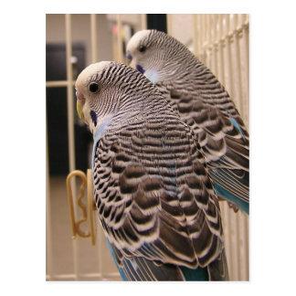 Parakeets Postkarten
