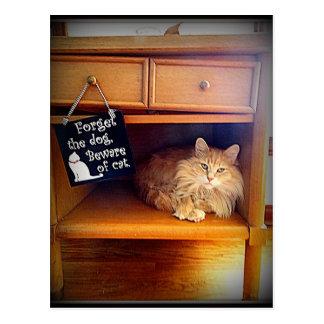 passen Sie von der Katzenpostkarte auf Postkarte