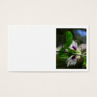 Passionfruit Blüte Visitenkarte