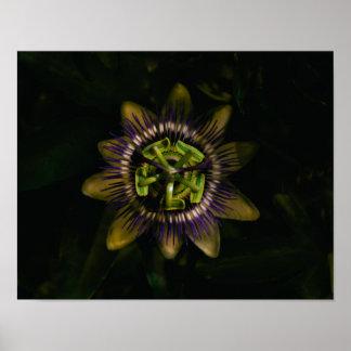 """Passionsblume 14"""" x11""""/35x25 cm poster"""