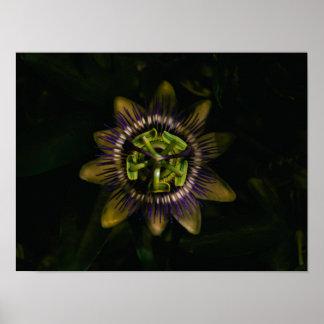 """Passionsblume 16"""" X12""""/40x30 cm Poster"""
