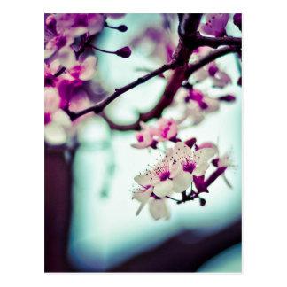 Pastellkirschblüten-Foto Postkarte