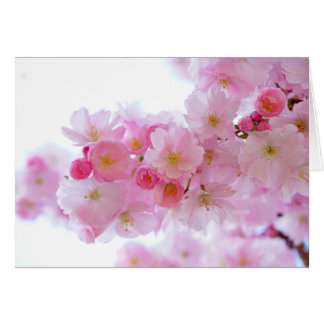 Pastellrosa-Kirschblüten Karte