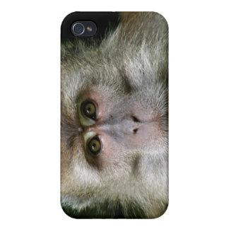Patas Affe iPhone Fall Schutzhülle Fürs iPhone 4