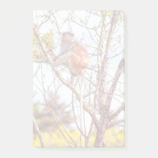 Patas ist herauf einen Baum Post-it Klebezettel