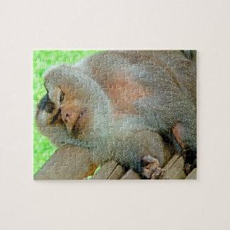 Pavian, der auf seinem Schutz sich entspannt Puzzle