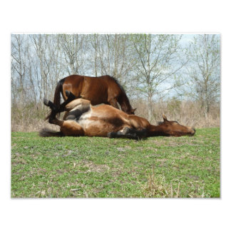 Paynes Prarie Konserven-wilde PferdeFoto-Druck Foto