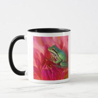 Pazifischer Baumfrosch auf Blumen in unserem Tasse