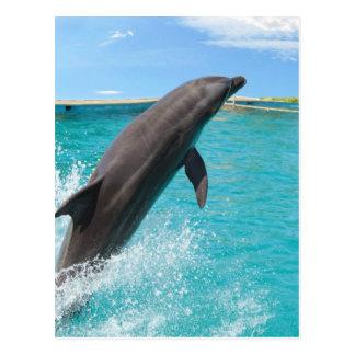 Pazifischer Bottlenose-Delphin-Postkarte Postkarte