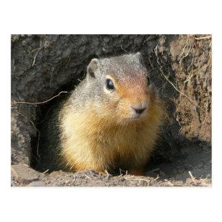 Peekaboo-Eichhörnchen Postkarte