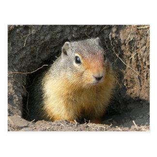 Peekaboo! Grundeichhörnchen Postkarte