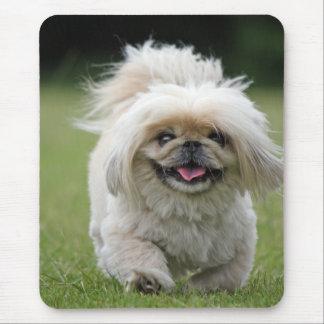 Pekingese Hundeniedliches Foto mousepad