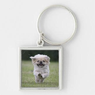 Pekingese Hundkeychain, niedliches Foto, Geschenk Schlüsselanhänger