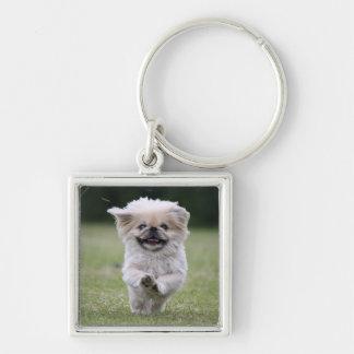 Pekingese Hundkeychain, niedliches Foto, Geschenk Silberfarbener Quadratischer Schlüsselanhänger