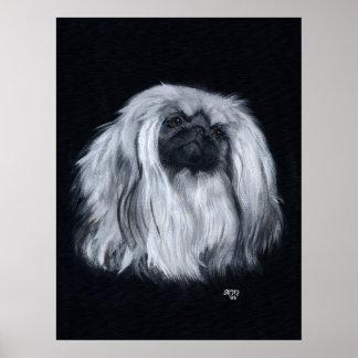 Pekingese Porträt in Schwarzem u. im Weiß Poster