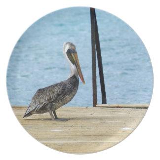 Pelikan auf dem Pier, Curaçao, karibische Inseln Teller