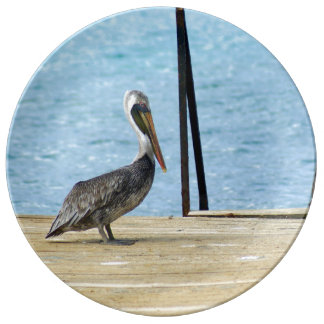 Pelikan auf dem Pier, Curaçao, Karibisches Meer, Porzellanteller