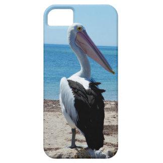 Pelikan auf Strand-Felsen, iPhone 5 Schutzhülle