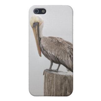 Pelikan Louisianas Brown iPhone 5 Cover