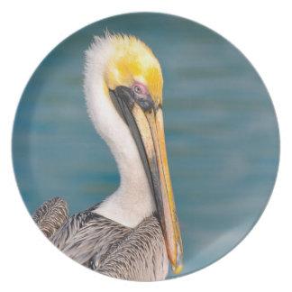 Pelikan-Porträt nah oben mit Ozean im Hintergrund Teller