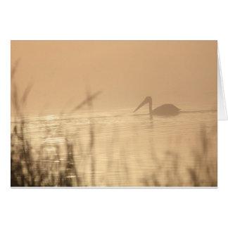 Pelikan-Sonnenaufgang Karte