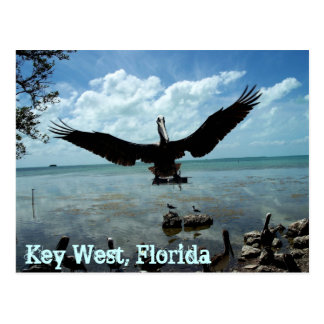 Pelikan-Tier-Postkarten-Foto Key West Florida Postkarte