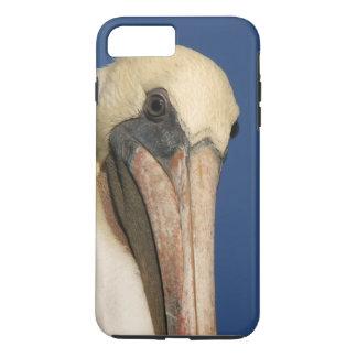 Pelikan-Vogel-wild lebende Tiere TieriPhone 7 Fall iPhone 8 Plus/7 Plus Hülle