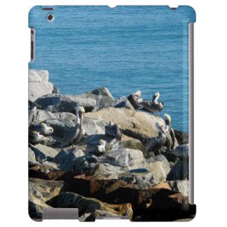 Pelikane auf den Felsen
