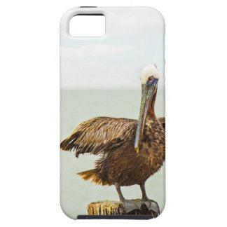 Pelikane gehockt auf Posten Etui Fürs iPhone 5
