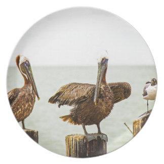 Pelikane gehockt auf Posten Teller
