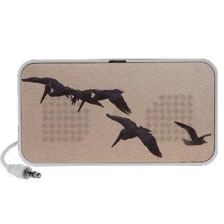 Pelikane u. Seemöwe-Gekritzel-Lautsprecher