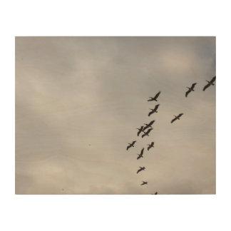 Pelikane über Havana Holzdruck