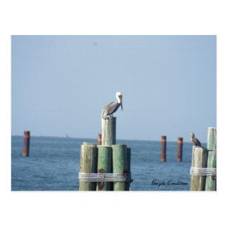 Pelikanpostkarte der beweglichen Bucht