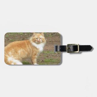 Pelzartige orange und weiße Katze Gepäckanhänger